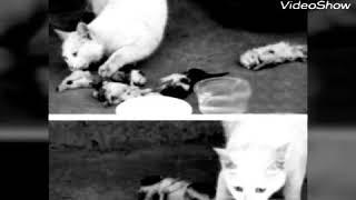 Ублюдки стреляли и ложили  мёртвых котят перед мамой кошкой😭😭