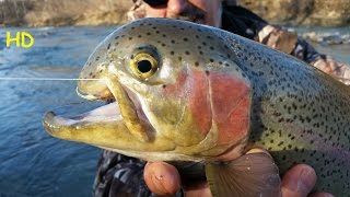 Full video king salmon huge brown trout at oak orchard for Oak orchard fishing report 2017