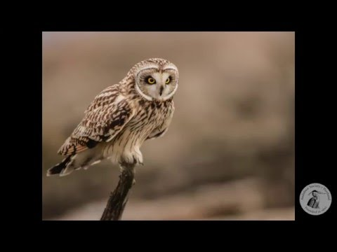 Nature Night: Prowling for Owls with Scott Carpenter