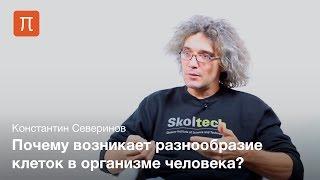 Транскрипция гена - Константин Северинов
