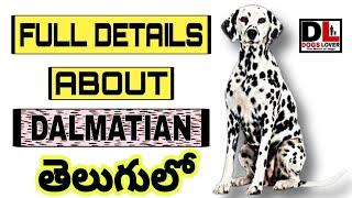 FULL DETAILS ABOUT DALMATIAN DOG  తెలుగులో   