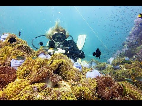 Вопрос: Почему рыба – клоун живет в окружении актинии?