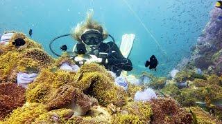 Actiniaria- Актинии или морские анемоны, Рыба-Клоун (amphiprion)