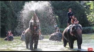 Vlog: Купание на слонах. Таиланд, Паттайя. Влог