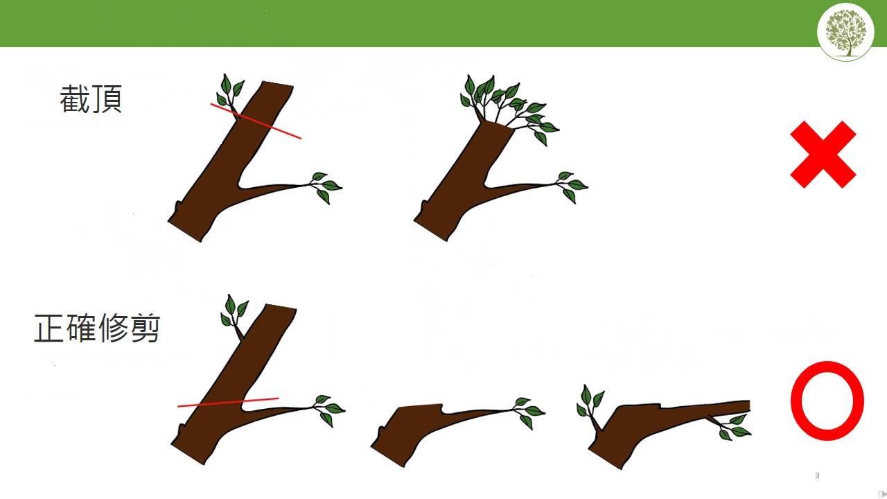 【修剪學課程】樹木截頂 Heading Cut - YouTube