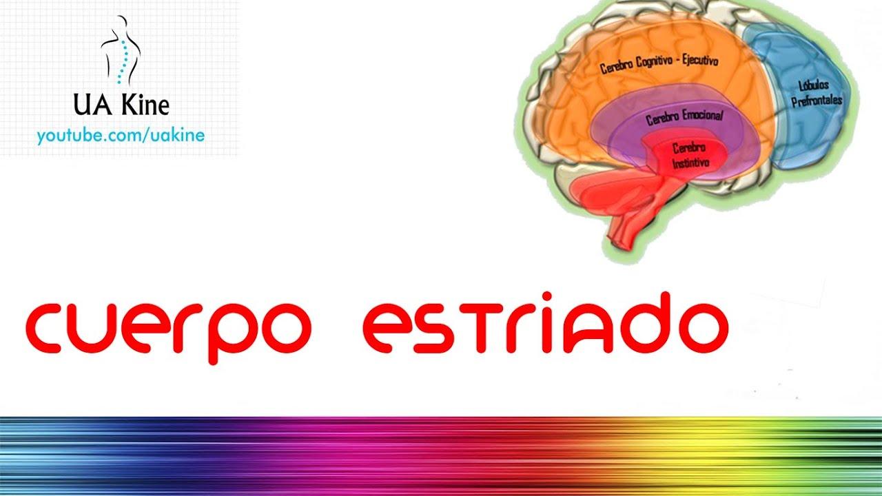 Revisión del cerebro de opciones binarias