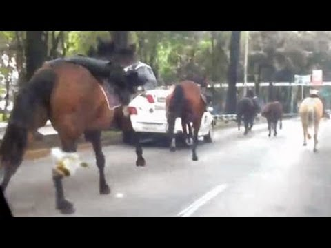 Mexico horse rampage: 30 police horses storm through Mexico City