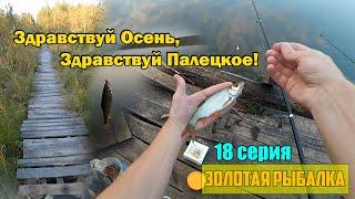 Золотая Рыбалка Здравствуй Осень Здравствуй Палецкое 18 серия
