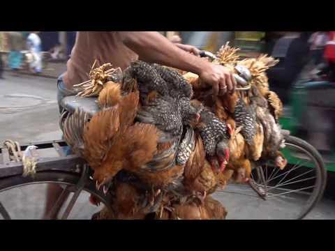 Kolkata Market Morning Walk, Visit India 33