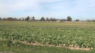 Hmong Farming in Rancho Cordova_P1