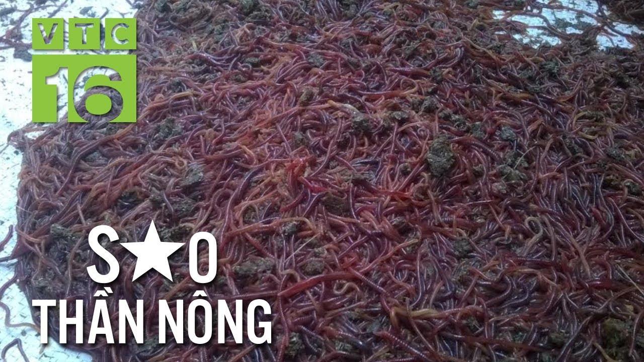 Nuôi giun: Nghề biến rác thải thành tiền tỷ | VTC16