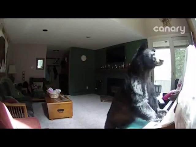Bear Breaks Into Colorado Home, Plays Piano