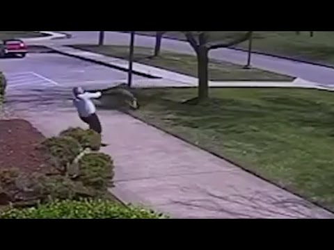 GOOSE Attacks COP Caught On Camera!! | What's Trending Now!