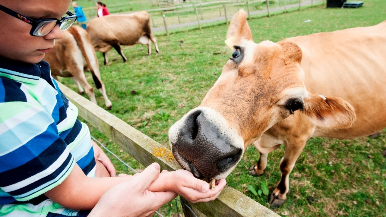 National Forest Adventure Farm Family Day Out West Midlands