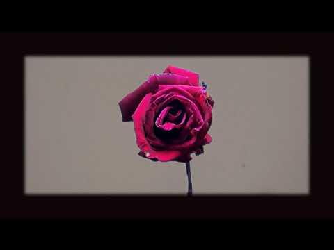 YuKI - Oba Dakala | Official Lyrics Video