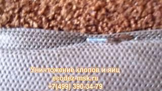Служба по уничтожению вредителей в Москве и Московской области Экодез-мск(, 2017-06-14T18:30:27.000Z)