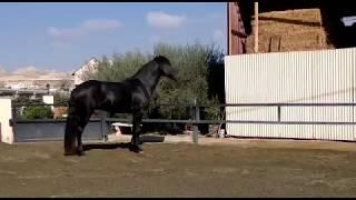 Купить лошадь в Испании