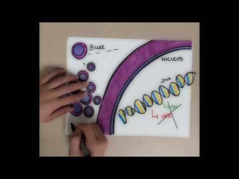 Understanding the Molecular Basis of Leukemia