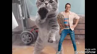 Коты танцуют под песню  мало половин
