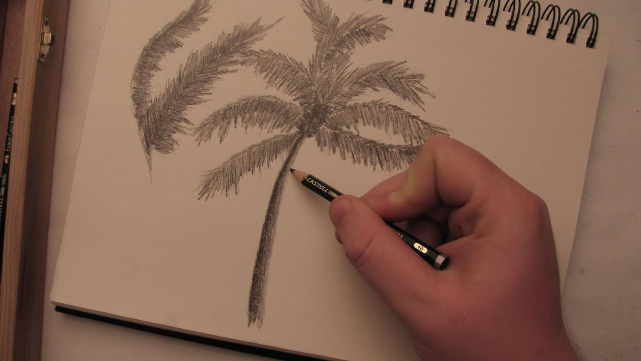 Uncategorized How To Draw A Palm Tree Step By Step how to draw a palm tree in pencil youtube
