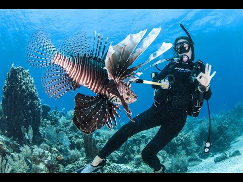 Helping save our reefs; Shooting lionfish in Roatan, Honduras.