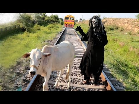 Train and Cow