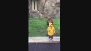 اسد يهجم على طفل في حديقة الحيوانات  lion attack child at japanees zoo