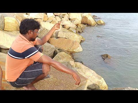 கடல் புழுவை வைத்து தூண்டில் போடும் முறை | Handline Fishing By Using Live Worms