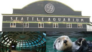 FEEDING A SEA LION!!! Seattle Aquarium (Seattle, Washington)   Lauren Miller