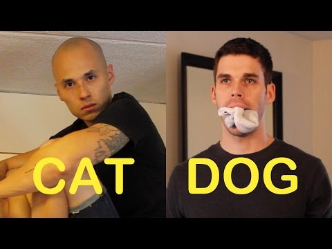 Cat-Friend vs. Dog-Friend 3