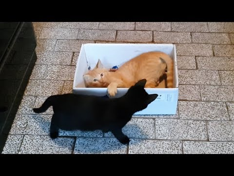 Cute Kittens Playing Together In The Box