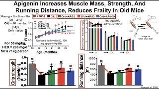 Apigenin Increases Muscle Mass And Improves Muscle Function In Both Young And Old Mice