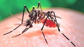 Ugonjwa wa Zika haujafika Tanzania (Jamii Leo 102)