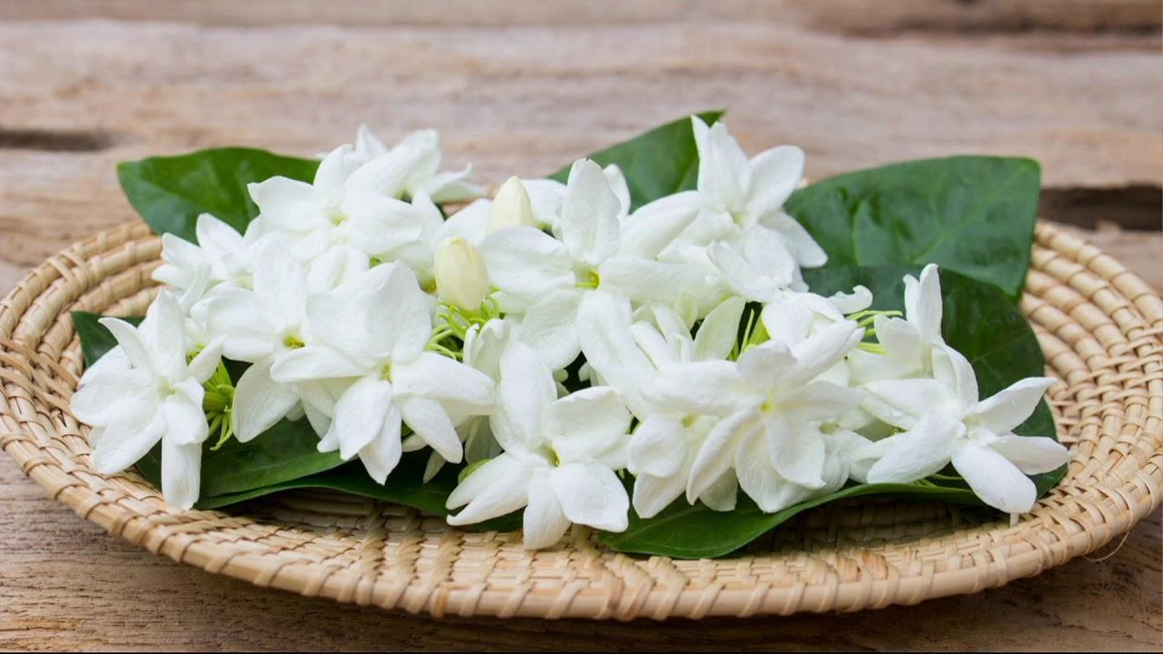 Cottage farms hawaiian jasmine vine on qvc youtube cottage farms hawaiian jasmine vine on qvc izmirmasajfo