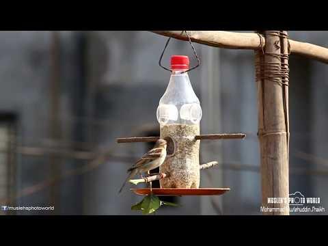 diy:bird-feeder.-how-to-make-bird-feeder-from-plastic-bottle