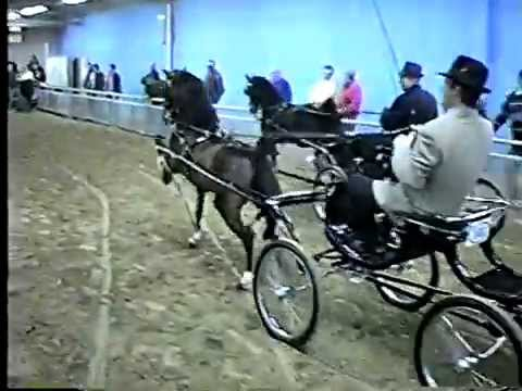 2000 Royal Winter Fair Jr Harness Pony & Hackney Horse Stallion On The Line
