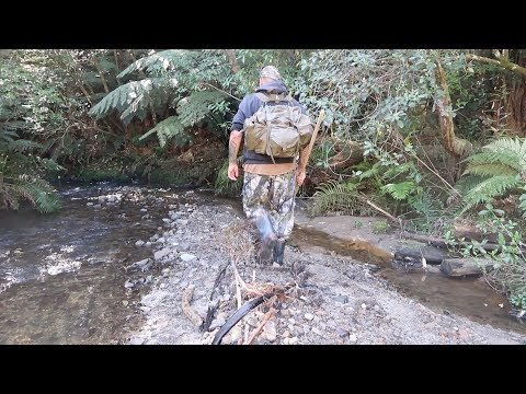 NZ Native Bush & Creek Trip/ Cooking on the Gas Stove