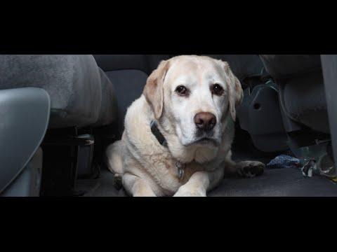 The Last Bone - A Dog Short Film