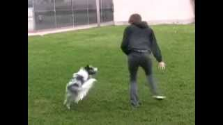 Freestyle Play- just for fun dog tricks in the park