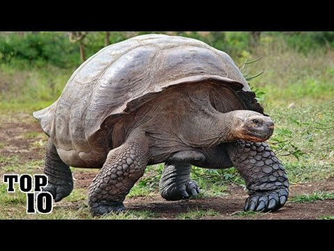 Top 10 Creatures That Will Outlive Humanity