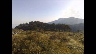 Mallorca's mountains and forests