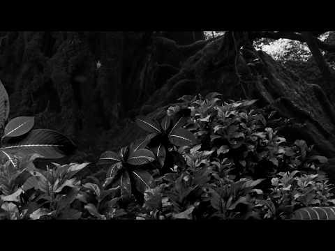 MDFK7 Teaser 2