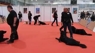 ドイツ原産の犬 Hovawart(ホファヴァルト)クラブによる Hovawart Rass...