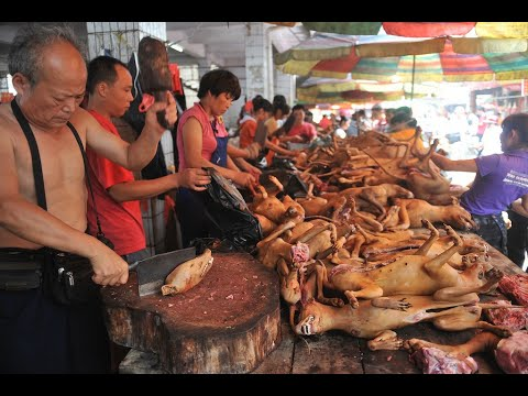 Stop Yulin Dog & Cat Meat Festival 2015 - 停止榆林狗與貓肉節2015