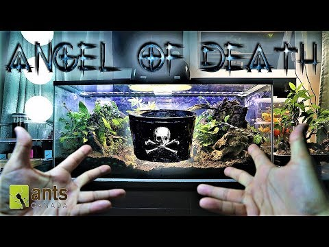 ANGEL OF DEATH: Why I Sent a Creature to Kill My Ants