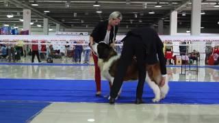 Dogs show ''Алматы Весенний''  Выставка собак. Часть 4