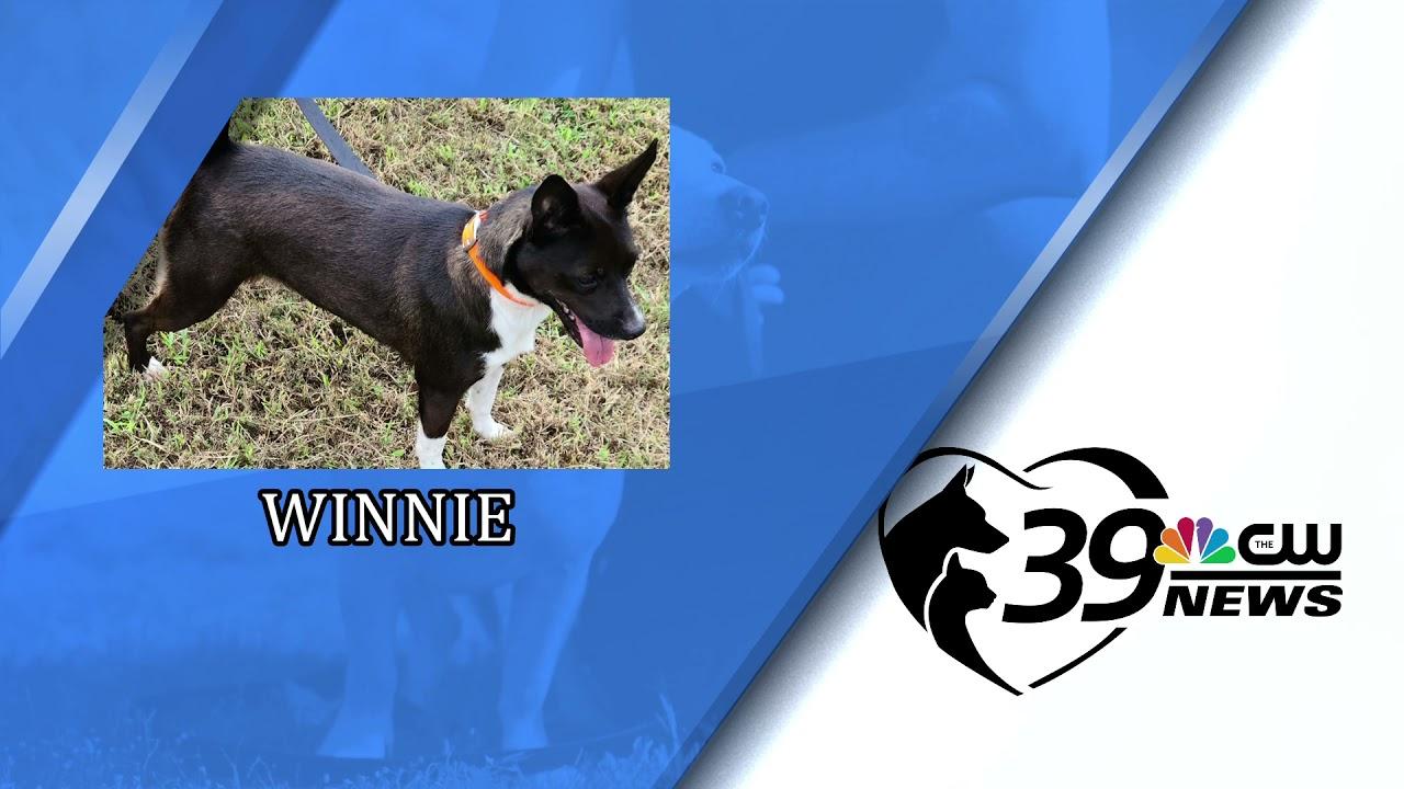 Pet Spotlight: Meet Winnie