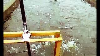 Волгореченск рыб-хоз