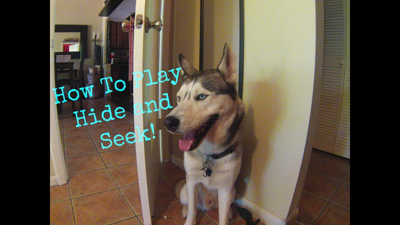How To Play Hide And Seek With Your Dog!