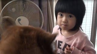 明和電気さんのチワワ笛を友達から戴いたので、孫娘のリリカが 犬達に得...
